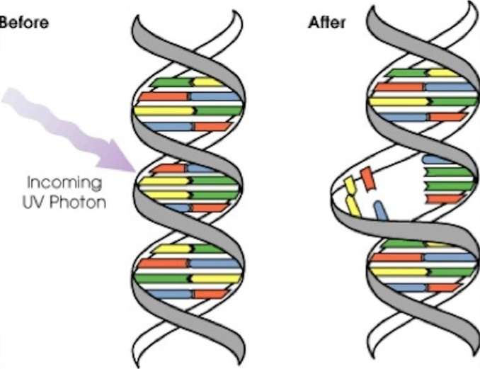 AR Trigger to DNA Mutation Activity